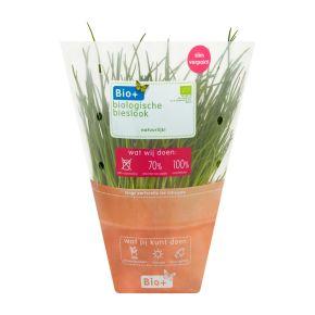 Bio+ Kruiden bieslook product photo