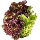 Salatrio product photo